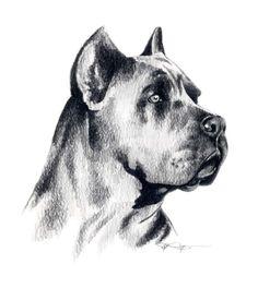CANE CORSO Dog Art Print Signed by Artist DJ by k9artgallery, $12.50