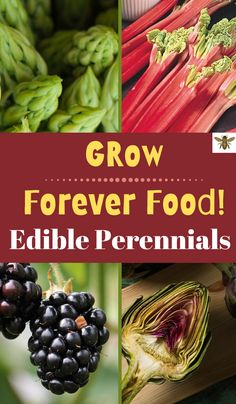 If you want a consistent source of food from your garden, every single year, you need edible perrennials!  Edible perennials keep on giving, year after year!  It's not too late to plant perennials and enjoy next year!  #perennials