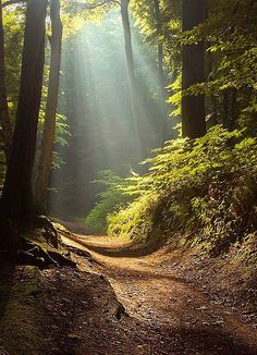 I would love to take a walk down this path