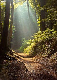 El bosque es mágico