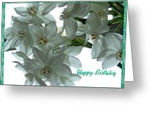 Narcissi Birthday Greeting Greeting Card by Joan-Violet Stretch