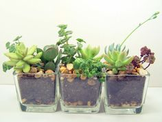 Terrarium centerpiece accents would be cute at an outdoor wedding and double as a guest gift.