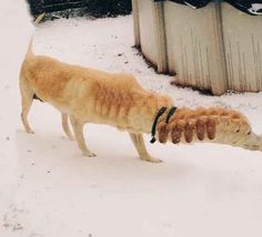 Dog with loooon, rippled neck.      24 Horrifying Animal Panorama Fails That Will Haunt Your Dreams