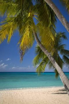 Photographic Print Seven Mile Beach Grand Cayman Islands West Ins By