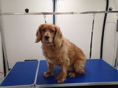 Paws Boutique Mobile dog grooming 07916161616 Birmingham/ Worcestershire