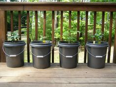 Bucket gardening - I'm hoping to try this in the spring.  I should probably start preparing and deciding what I want to plant! :)  Lol!