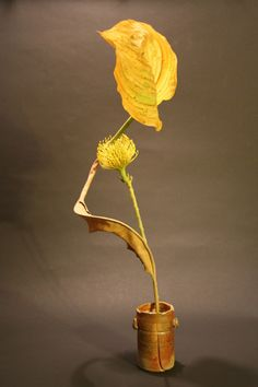 Hosta leaf, dried bird of paradise leaf and yellow pincushion protea.