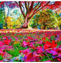 Wow amazing colors