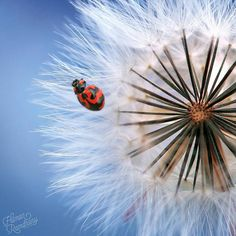 Insanely Detailed Macro Photos Of Insects by Hilman Ramdhany #art #photography #Macro Photography