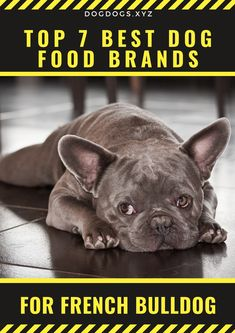 The ingredients and nutrition facts utilized by those best dog food brands for French Bulldog are almost similar to each other for the same categories. Dog Training Methods, Basic Dog Training, Dog Training Techniques, Training Your Puppy, Training Dogs, Healthy Dog Food Brands, Best Dog Food Brands, Puppy Obedience Training, Positive Dog Training