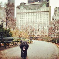 A Central Park walk.