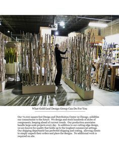 birch tree dividers