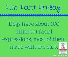 #FunFactFriday brought to you by #AERC #facts #funfacts #animalfacts #dogfacts #dogs #petfacts