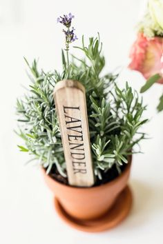 Love this instead of succulents, that stick could say a name for a placecard