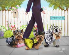 Owned By Yorkies Painting by Catia Cho - Owned By Yorkies Fine Art Prints and Posters for Sale