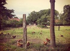 Biohof Rotermund Hemme: Leben hier Hühner, die glücklich sind? Wir können es nicht mit absoluter Sicherheit sagen. Dafür sind die rund 2.000 Hennen auf dem Bioland-zertifizierten Hof in der Wedemark (fast) niemals krank.