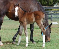 Flashy new Animal Kingdom filly out of Beholder's sister Victory Party @ArrowfieldStud.