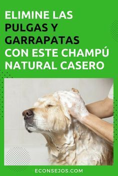 Animals And Pets, Funny Animals, Cute Animals, Yorshire Terrier, Schnauzer, Diy Shampoo, Homemade Shampoo, Mundo Animal, Dog Care