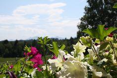 Blick vom Hotel in die Ammergauer Alpen