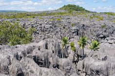 A Day in the Réserve Spéciale de L'Ankàrana (Madagascar). 'This reserve makes a wonderful day trip from Diego Suarez and features some truly bizarre scenery. We couldn't get enough photos of the strange spires of ruby-red tsingy (limestone pinnacle  formations) and we got more than excited when we spotted one of the nearly a dozen species of lemur living in this still-wild reserve.' http://www.lonelyplanet.com/madagascar/northern-madagascar/reserve-speciale-de-lankarana