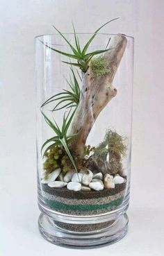 Terrarium Ideas Book - Slideshow from Gardener's Supply create a mild woodland setting, display miniature tropicalS or design a attractive fairy garden using plants, curios and found objects, such as pebbles and sea glass. Decor Terrarium, Air Plant Terrarium, Glass Terrarium Ideas, Air Plant Display, Plant Decor, Decoration Plante, Deco Nature, Deco Floral, Terraria