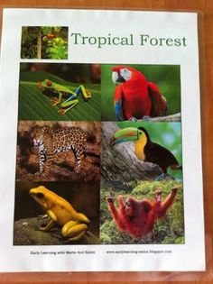 tropical forest-South America