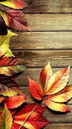 Fall background - Other Wallpaper ID 1857209 - Desktop Nexus Abstract Nature Iphone Wallpaper, Pop Art Wallpaper, Cellphone Wallpaper, Wallpaper Backgrounds, Wallpaper Ideas, Fall Background, Thanksgiving Wallpaper, Fall Pictures, Belle Photo