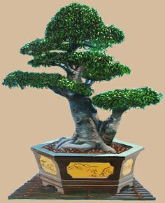 Ficus bonsai and most expensive on pinterest for Most expensive bonsai tree ever