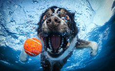 Water fetch from the otherside ;-) A FAMOUS PHOTOGRAPHER IN CALIFORNIA DECIDED TO TAKE A FEW OF HIS FURRY FRIENDS, A BALL AND A HIGH RESOLOUTION UNDERWATE R CAMERA, HERE ARE THE RESULTS... ENJOY!