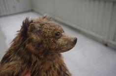 A bear on a mission  alderworlds.com