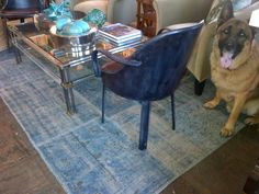 King models our new #turkish #rug in the #hamptons #dogsofmecox #doglover #petlover #dogs #GermanShepherd