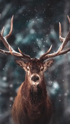 Nature Animals, Animals And Pets, Baby Animals, Cute Animals, Hirsch Wallpaper, Deer Wallpaper, Wildlife Photography, Animal Photography, Beautiful Creatures