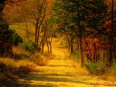 The Road to the Left (by ~M~Chelle & her view***)