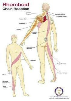 Chronic Pain Treatment Redcliffe - Positive Pain Solutions offer remedial massage, spine and hip alignment and chronic pain relief using Finch Therapy Yoga Anatomy, Human Anatomy, Remedial Massage, Sports Therapy, Spine Health, Medical Anatomy, Neck And Shoulder Pain, Muscle Anatomy, Massage Therapy