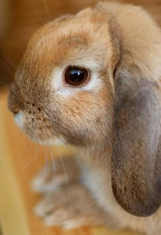 I love bunnies so much!