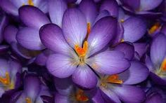 Image result for pics of flowers