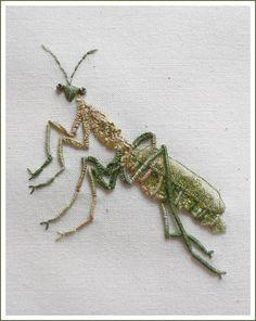 Praying mantis...❤