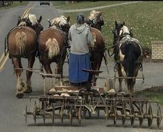 Amish woman driving a team pulling a disc plow