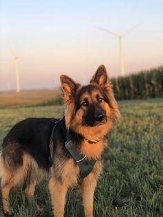 Hard Photo, Working Dogs, Dog Photos, Cat Memes, Worlds Largest, Conservation, Husky, Corgi, Wildlife