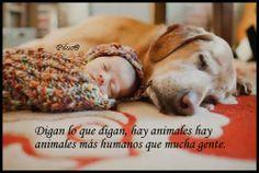 Animales humanos...