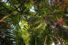Jungle canopy - Google Search