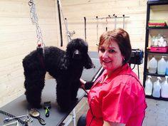 Monique met poedel Doebi in de Trimsalon (maart 2015)