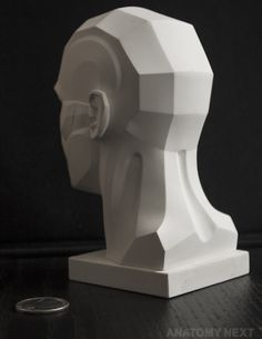 Anatomy Next store - MALE TOPOGRAPHY HEAD 3D PRINT model