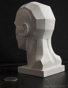 Anatomy Next store - MALE TOPOGRAPHY HEAD 3D PRINT model
