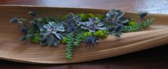 palm pod with succulents, eryngium, moss, designed by Sandy Yorks