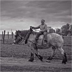 the ride home Big Horses, Work Horses, Pretty Horses, Beautiful Horses, Animals Beautiful, Farm Animals, Animals And Pets, Percheron Horses, Horse Facts