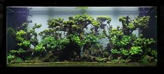 Think HUGE – a dramatic aquascape by Judy Prajtino, via Nordic Scapers facebook. Also, check this out: https://www.facebook.com/media/set/?set=a.411051082433546.1073741836.410399672498687&type=3