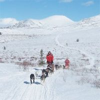 Arctic Explorers, Antarctica, Sled, Dogs, Outdoor, Lead Sled, Outdoors, Doggies, Outdoor Games