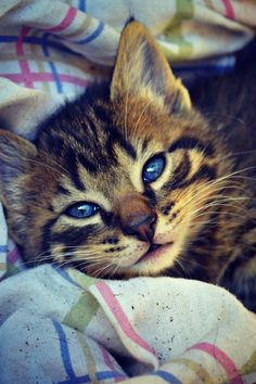 """""""A cat allows you to sleep on the bed--on the edge."""" --Jenny DeVries"""