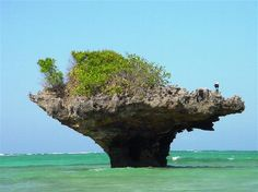 coral reef rock... in the water at Chale Island, Kenya, Africa